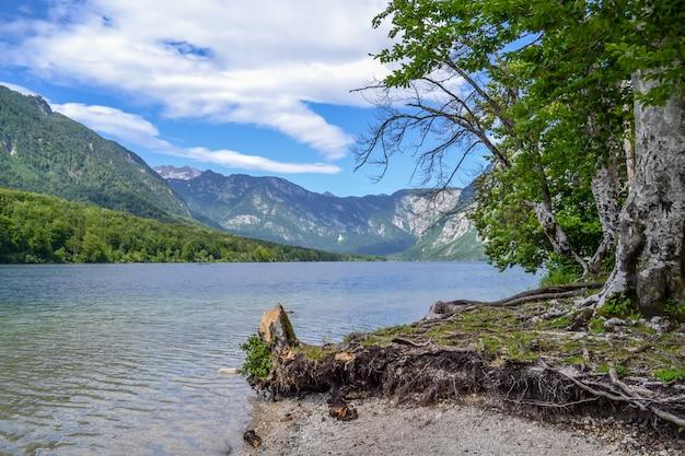 Lago e costa da montanha com tocos e raizes sinuosas interessantes.