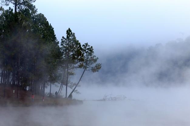 Lago e floresta de pinheiros na hora da manhã em