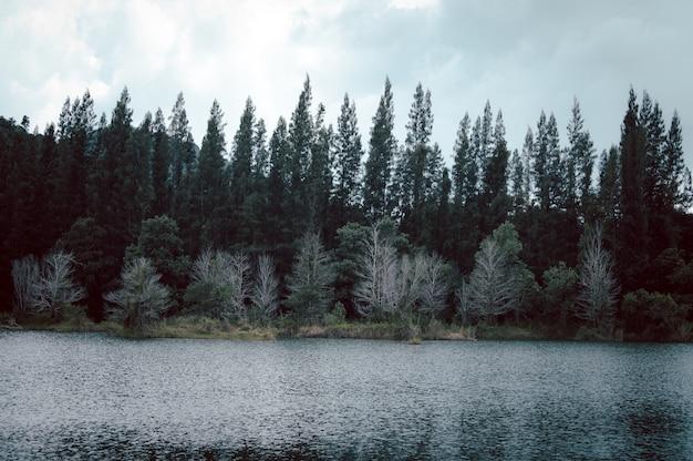 Lago e floresta de pinheiros no parque público de liwong, chana, songkhla, tailândia em liwong, songkhla, tailândia
