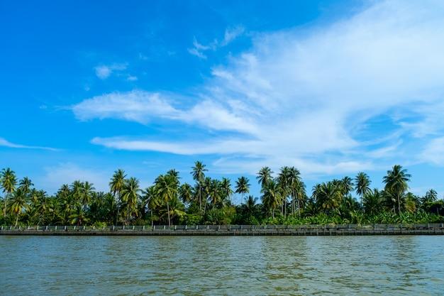 Lago e palmeiras lindo verão sob o céu azul pegar um barco para apreciar a vista ao longo do lado do rio no rio meaklong, ampawa, tailândia
