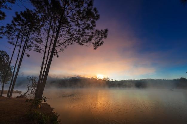 Lago e pinhal no tempo da manhã em
