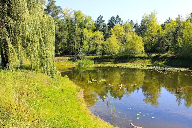 Lago em um parque