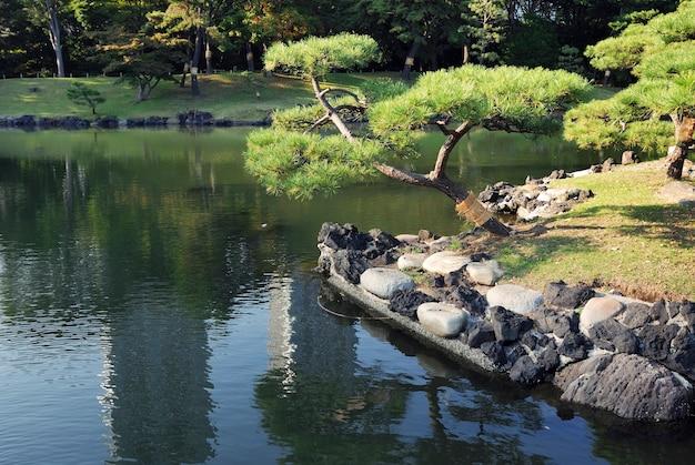 Lago japonês com pinheiro