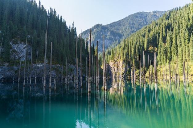 Lago kaindy - lago de montanha no cazaquistão