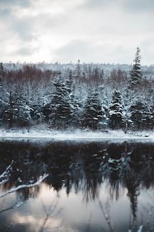 Lago na floresta com neve
