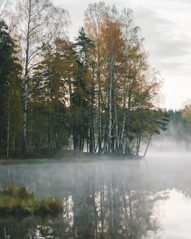 Lago nebuloso em uma floresta de bétulas no outono
