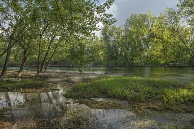 Lago no meio de uma floresta com árvores de folhas verdes sob um céu nublado