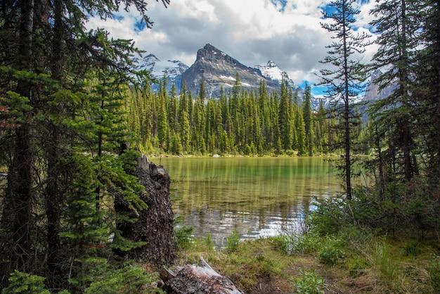 Lago ohara pista de caminhada em dia nublado na primavera, yoho, canadá