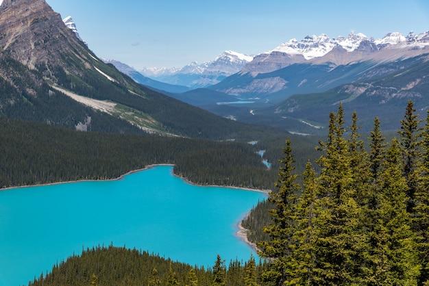 Lago, payto, em, verão, ensolarado, dayfrom, a, topo, de, a, trilha hiking, em, alberta, canadá