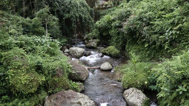 Lago que flui entre rochas no meio da floresta