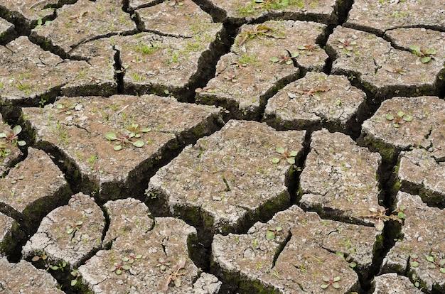 Lago seco com terra rachada 5