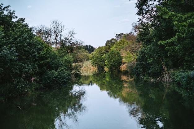 Lago selvagem rodeado por árvores com folhagem verde, bela paisagem.