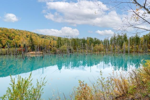 Lagoa azul (aoiike) em biei, estação de outono de hokkaido, é o resultado de trabalhos no rio biei, realizados após a erupção do monte tokachi em 1988