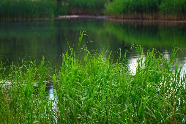 Lagoa e plantas aquáticas em dia de verão.