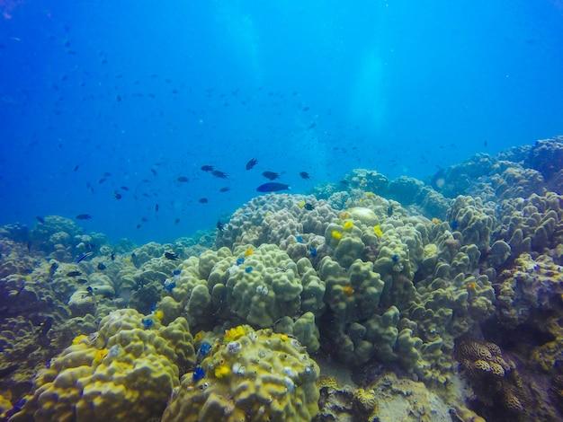 Lagoa luz solar peixes animal exótico