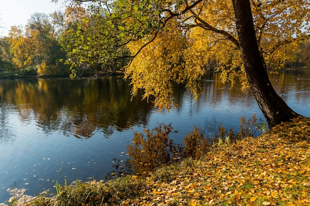 Lagoa no outono, folhas amarelas, reflexão. paisagem de reflexão do lago da floresta de outono.