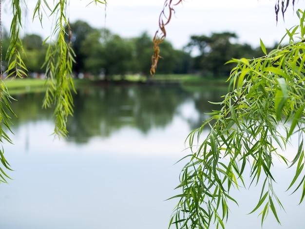 Lagoa pacífica com sombra das árvores na floresta.