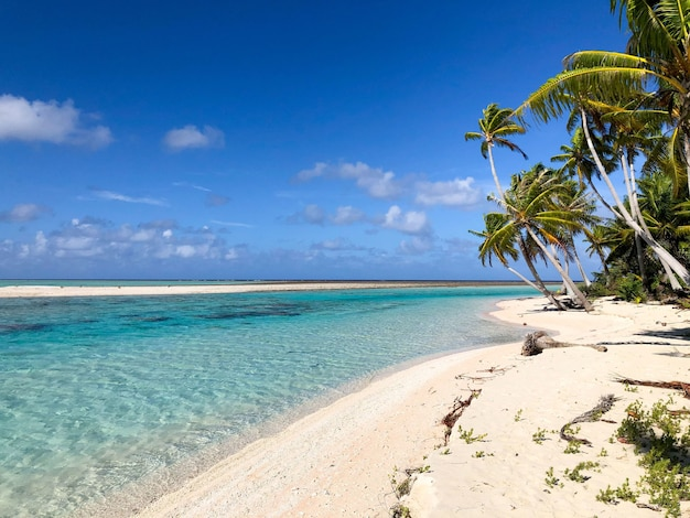 Lagoa tikehau na polinésia francesa