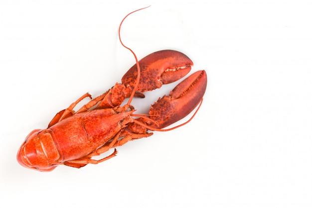 Lagosta isolada - camarão cozido no vapor camarão frutos do mar camarão no fundo branco