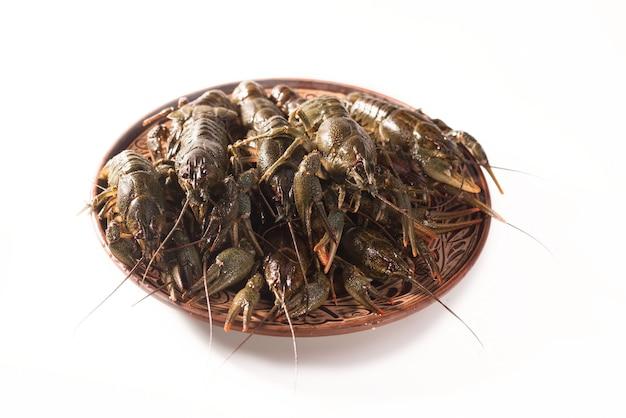 Lagostas vivem em um prato isolado em um fundo branco. lagosta crua. lanche de frutos do mar frescos.