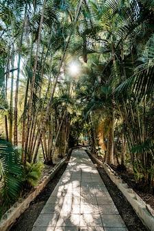 Lajes de pavimentação na trilha entre plantas tropicais. palmeiral. ásia