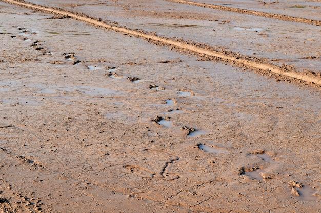 Lama do solo e pegada no campo de arroz preparar para o arroz de planta