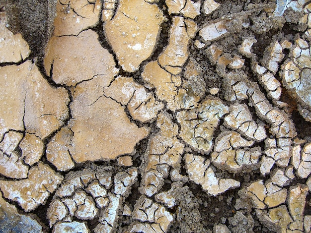 Lama sem água, com várias rachaduras na superfície.