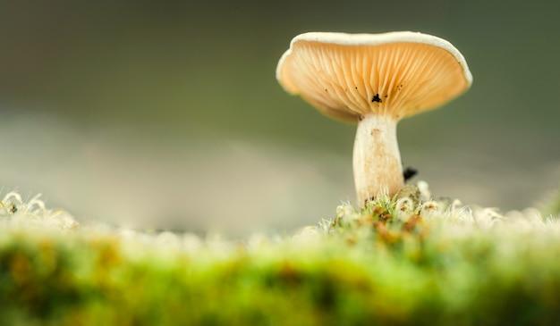 Lamelas de cogumelos comestíveis vistas de baixo