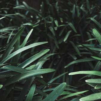 Lâminas de grama de arbusto de close-up