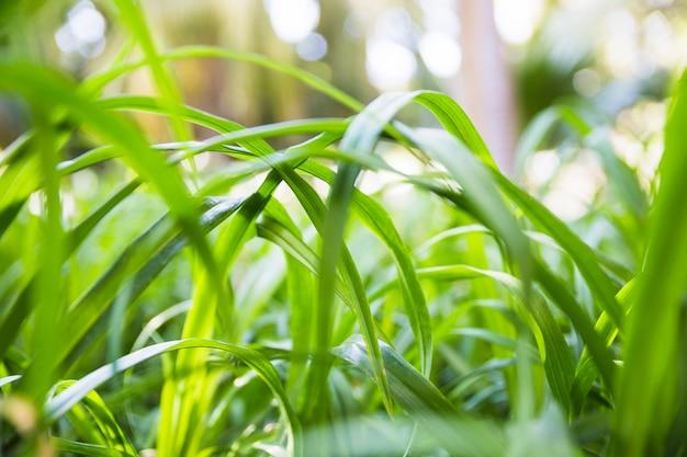 Lâminas de grama em dia ensolarado