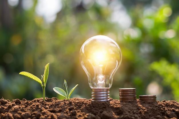 Lâmpada com moedas e planta jovem. conceito de economia