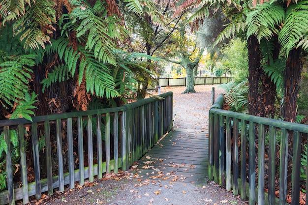 Lâmpada de madeira na floresta de redwoods whakarewarewa em rotorua, nova zelândia