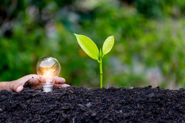 Lâmpada de proteção de mão, fontes de energia renovável, energia natural e amo o conceito do mundo.