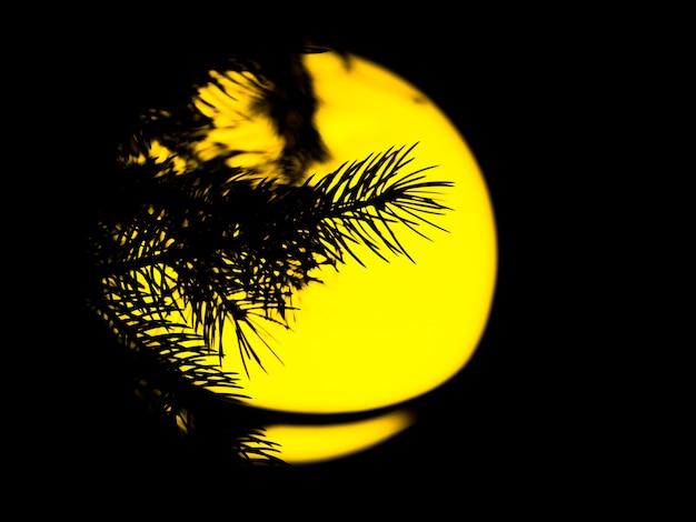 Lâmpada do vintage da rua com a árvore de natal na noite fora.