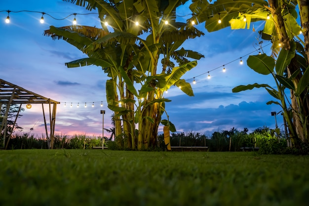 Lâmpadas brancas penduradas em uma corda entre as palmas das mãos em um jardim gramado verde