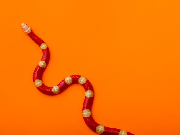Lampropeltis triangulum, comumente conhecido como cobra leiteira ou cobra leiteira, é uma espécie de cobra-rei.