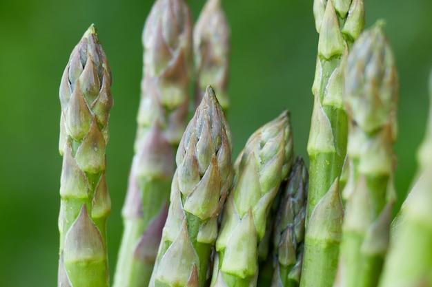Lanças de espargos verdes frescos no sol, copie o espaço para o texto. colheita, pronto para cozinhar, dieta vegana saudável, comida local.