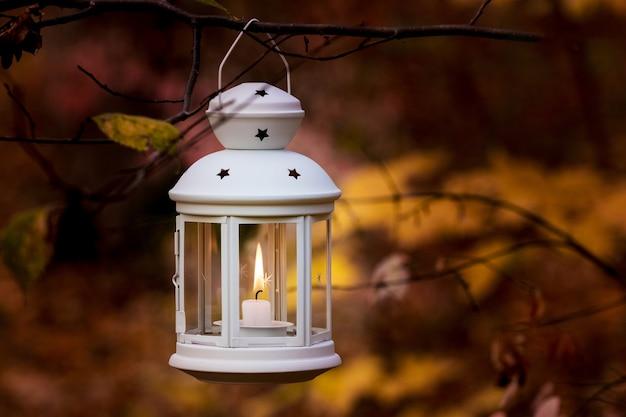 Lanterna com uma vela em um galho de árvore na floresta de outono à noite.
