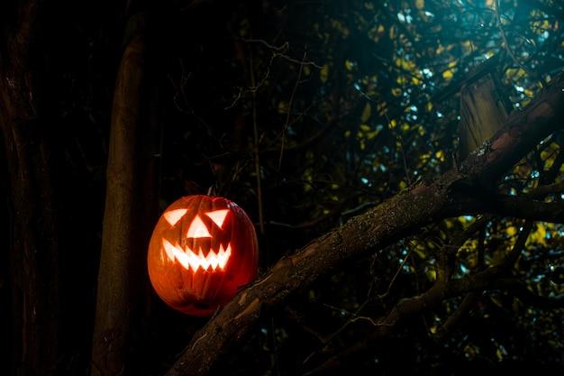 Lanterna de abóbora assustadora de halloween em uma velha árvore à noite