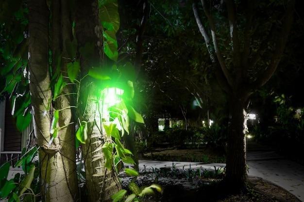 Lanterna de madeira com luz verde pendurada em uma árvore perto das folhas ilumina a estrada com uma lâmpada ameaçadora