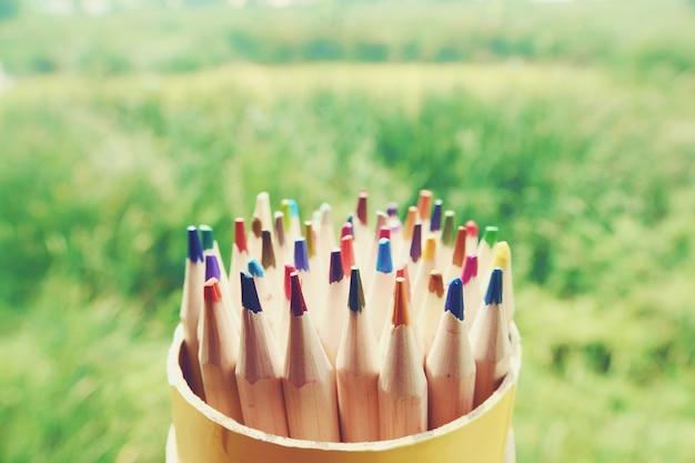 Lápis coloridos de madeira sobre um fundo verde jardim