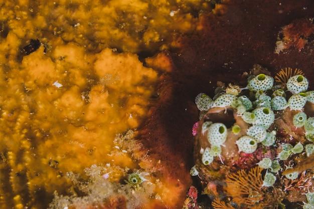 Laranja chão submarino