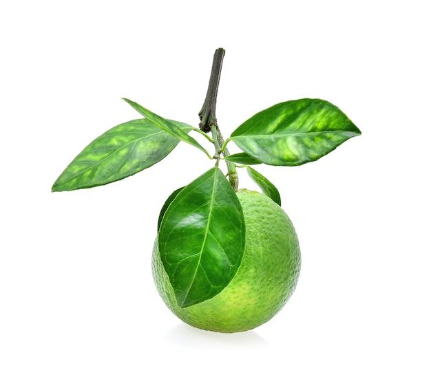 Laranja doce (citrus medica linn) isolada no fundo branco