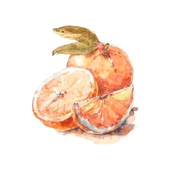 Laranja inteira laranja com meia e uma fatia suculenta aquarela