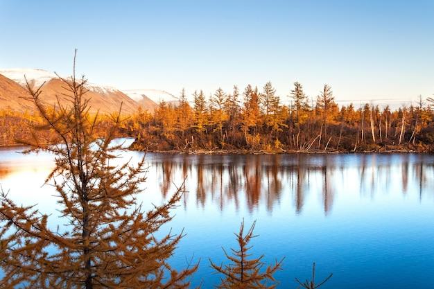 Larício amarelo em um lago azul na tundra