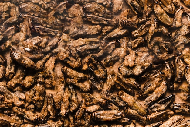 Larvas comestíveis de comida asiática frita