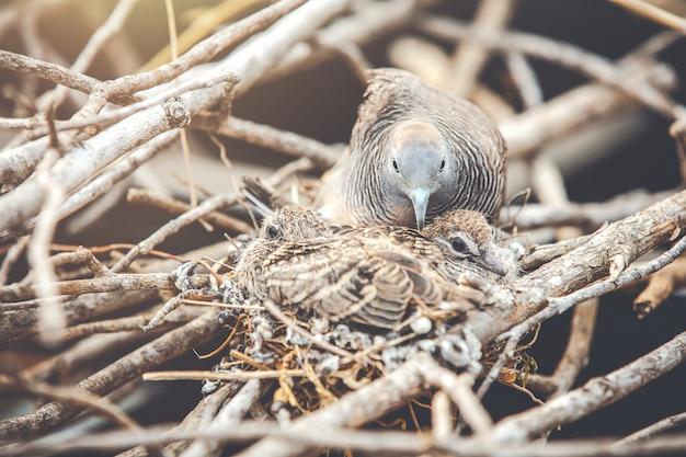 Larvas de bebê no ninho no verão