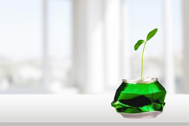 Lata reutilizada para o cultivo de uma nova planta