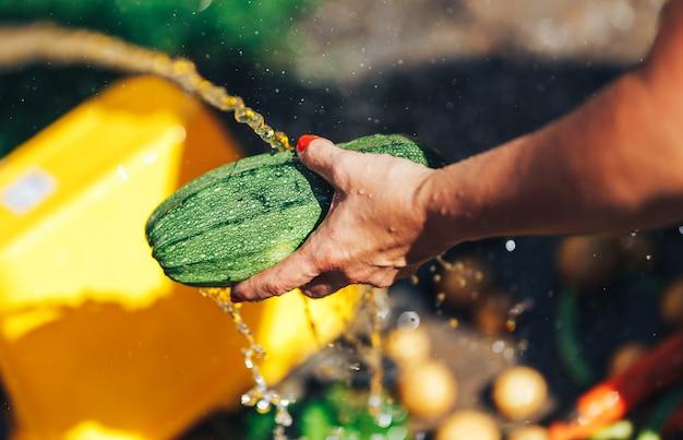 Lavar legumes, mãos de mulher lavar abobrinha verde ao ar livre luz do sol