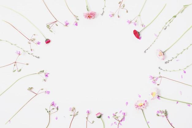 Lay plana, flores silvestres em um fundo branco, padrão floral de flores e pétalas azuis, galhos da planta, gramíneas anuais